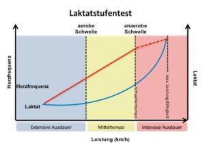 Schematische Auswertung eines Laktatstufentests