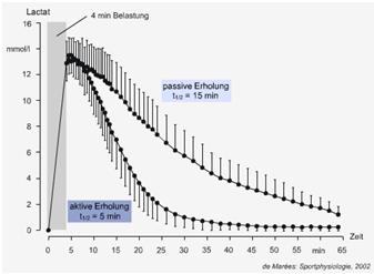 Laktathalbwertszeit bei aktiver und passiver Erholung